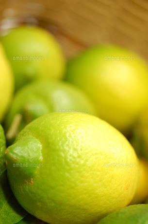 レモンの素材 [FYI00322491]
