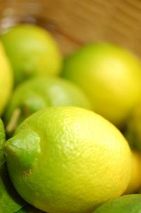レモンの写真素材 [FYI00322491]