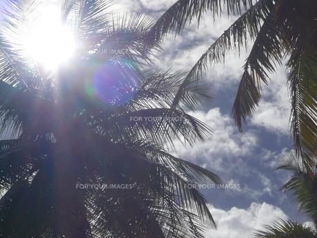モルディブの日差しの写真素材 [FYI00322492]