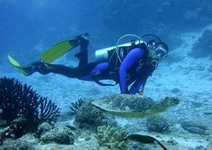 モルディブでダイビングの素材 [FYI00322502]
