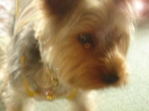日向ぼっこの愛犬の写真素材 [FYI00322638]