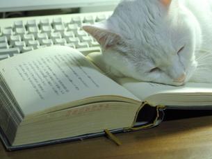 開いた本を枕に眠る猫の写真素材 [FYI00322684]