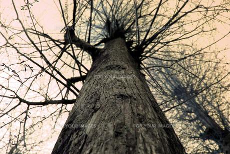 生命を感じる暖かい樹の素材 [FYI00322742]