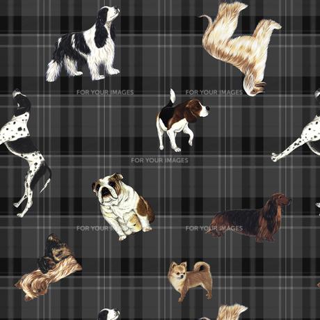 いろんな種類の犬とチェックの写真素材 [FYI00322768]