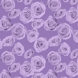 バラの織物の写真素材 [FYI00322789]