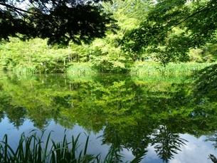 夏の雲場池の写真素材 [FYI00322959]