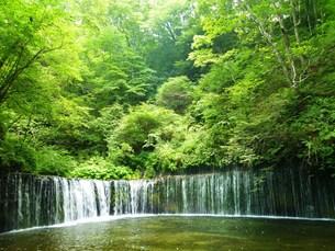 白糸の滝の写真素材 [FYI00322983]