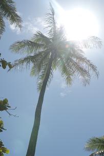 照りつける太陽の写真素材 [FYI00322995]