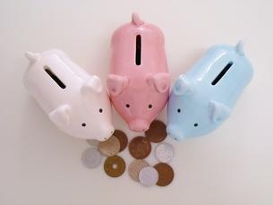 3匹のブタの貯金箱とお金の写真素材 [FYI00323012]