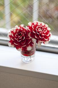 窓辺の花の写真素材 [FYI00323055]