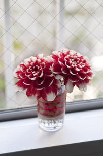 窓辺の花の素材 [FYI00323073]