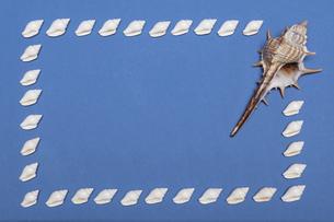 貝殻 コピースペースの写真素材 [FYI00323221]