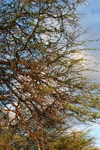 枝の素材 [FYI00323301]