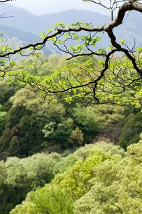 雑木林の新緑の素材 [FYI00323493]