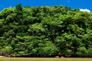 熱帯性植物の写真素材 [FYI00323510]