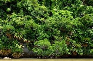 熱帯性植物の写真素材 [FYI00323514]