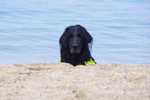 黒い犬の写真素材 [FYI00323552]