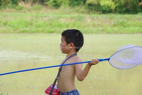 虫捕り網と男の子の写真素材 [FYI00323559]