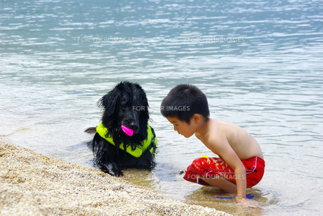 犬と子供の写真素材 [FYI00323560]