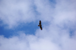 空と鳶の写真素材 [FYI00323562]