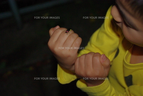 蛍を手に載せた子供の写真素材 [FYI00323564]