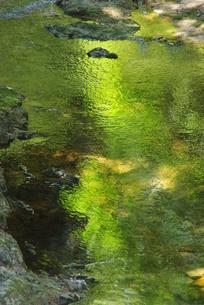 緑の川面の写真素材 [FYI00323574]