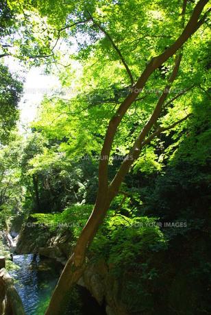 緑の木々の写真素材 [FYI00323581]