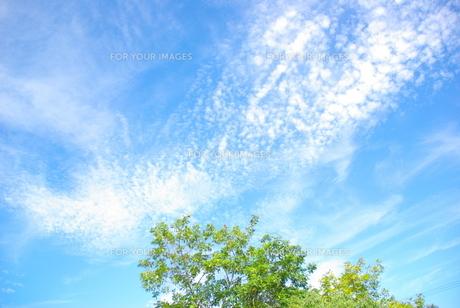 青い空と緑の写真素材 [FYI00323582]