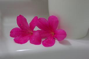 洗面台の写真素材 [FYI00323583]