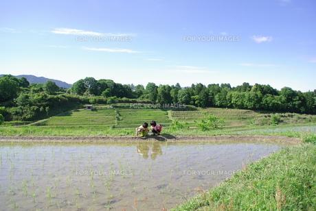 田んぼで遊ぶ子供の写真素材 [FYI00323585]