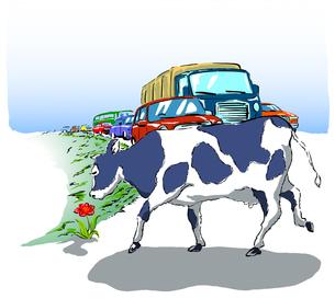 花と牛の写真素材 [FYI00323627]