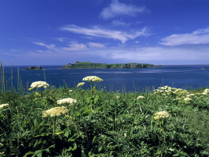 スコトン岬の夏の写真素材 [FYI00323732]