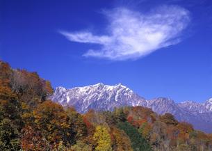 秋の黒沢高原の写真素材 [FYI00323737]