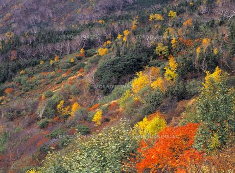 乗鞍-位ヶ原の秋の写真素材 [FYI00323793]