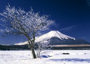 富士山と樹氷の写真素材 [FYI00323821]