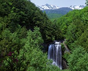 善五郎の滝の写真素材 [FYI00323910]