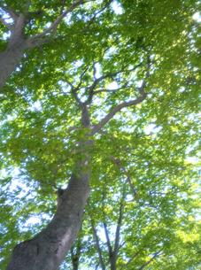 新緑と木漏れ日の写真素材 [FYI00323917]