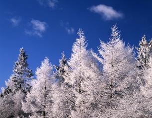 樹氷と青空の写真素材 [FYI00323935]
