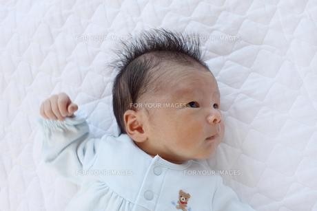 赤ちゃんの写真素材 [FYI00324054]