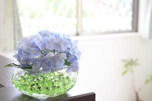 紫陽花のあるリビングの写真素材 [FYI00324115]