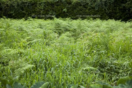 生い茂る草の素材 [FYI00324592]