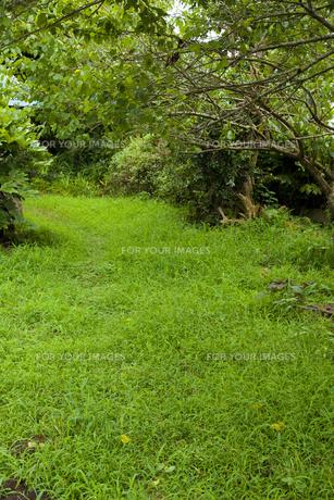 緑が生い茂る庭の素材 [FYI00324612]
