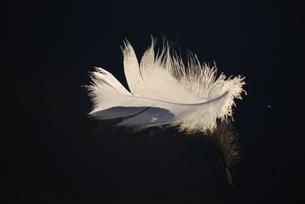 羽根の素材 [FYI00324636]