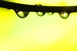 雨の雫の素材 [FYI00325042]