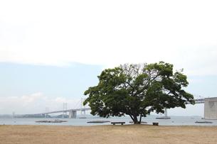 瀬戸大橋と大木の素材 [FYI00325098]