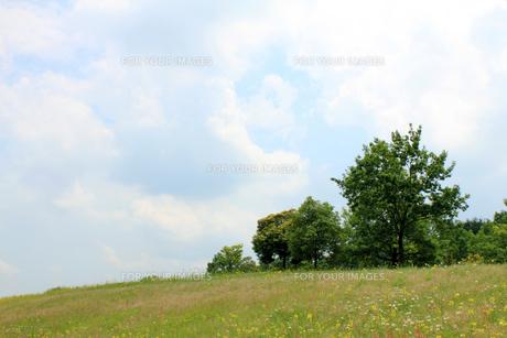 青空と草原の素材 [FYI00325100]