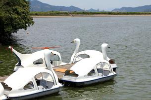 白鳥の乗り物の素材 [FYI00325127]