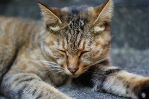 道端で居眠りする猫の写真素材 [FYI00325277]
