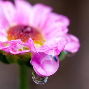 水滴の写真素材 [FYI00325469]