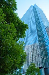 高層ビルと木の写真素材 [FYI00325481]